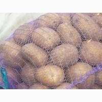 Продовольственный картофель оптом