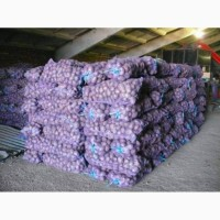 Картофель оптом от 20 тонн 5+ напрямую от КФХ от 6 руб/кг