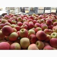 Яблоко оптом сетевое