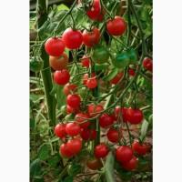 Семена томата-черри Хоровод