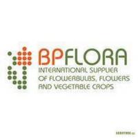 BPflora - Луковицы тюльпанов, луковицы лилий, лук севок