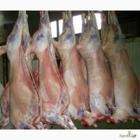 Мясо баранина оптом ХАЛЯЛЬ