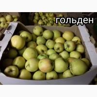 Ростовские яблоки от производителя