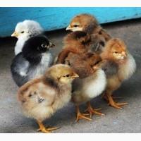 Комбикорм для цыплят и бройлеров с 1 по 7 неделю ПК-5