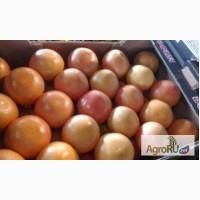 Мандарины Нова, Сацума, томаты Турция
