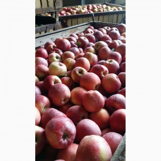 Продажа яблок (Молдавия)
