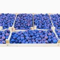 Приобретайте у нас лучшие сливы сорта Чернослив с доставкой