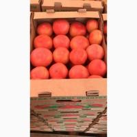 Сертифицированные помидоры «Розовый гигант» уже в продаже
