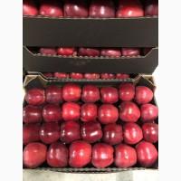 Продаем яблоки Молдавские от производителя в Брянске