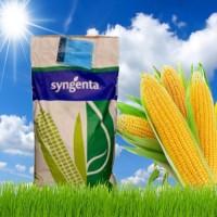 НК Фалькон Гибрид кукурузы