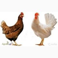 БВМД Универсальный для яичной птицы ПРО 10% Purina. Код 2525