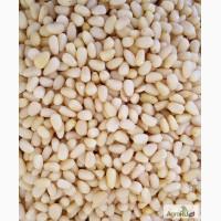 Продаем кедровый орех очищенный ядро