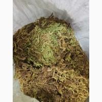 Сфагнум болотный (мох) (оптом от 5кг)