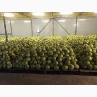 Продаем капусту