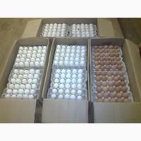 Продажа: Яйца С1, С2, С0. Миланж