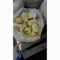 Перец болгарский сорт ФЛАМИНГО от производителя