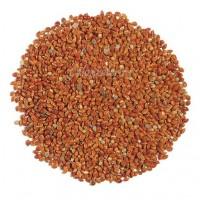 Сорго зерновое (семена) опт от 1 тонны