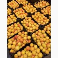 Продам абрикосы в больших объемах
