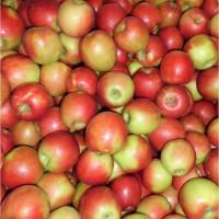 Яблоки Кримсон по выгодной цене только для оптовиков
