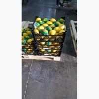Лимоны (Lamas)