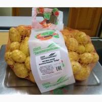 Картофель Бебик