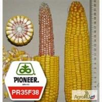 Семена кукурузы ПР35ф38 ФАО490