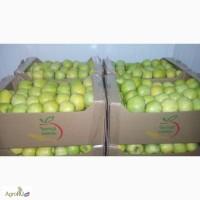 Яблоко Крым от производителя