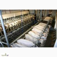 Оборудование для содержания и доения коз овец крс