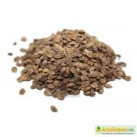 ООО НПП «Зарайские семена» закупает семена эспарцета от 20 тонн
