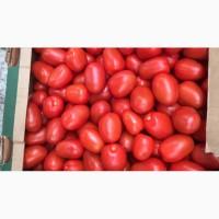 Реализуем продажу помидора Новичок в любом количестве