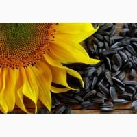 Реализуем оптовую закупку подсолнечника урожая 2018 года