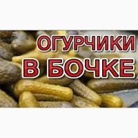 Огурцы Соленые. Бочковые. 9-14 см