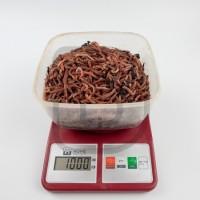 Червь Дендробена 1 кг