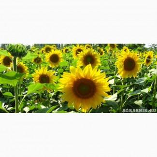 Гибриды семена подсолнечника ПР64Ф66, ПР62А91, ПР63А90, ПР64Ф50, ПР64А89, ПР64Х32