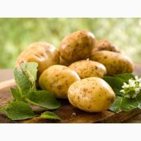 Куплю картофель