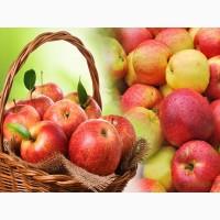 Яблоки на выгодных условиях от производителя
