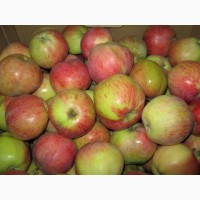 Продаем яблоки сорта Кристин оптом по цене от производителя