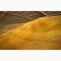 Ведем оптовую закупку пшеницы, Класс 4