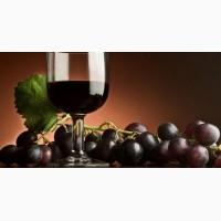 Виноград Изабела