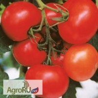 Берберана F1, семена томата, 500 шт. (Энза Заден)
