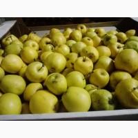 Продам: яблоки на переработку в Нижнем Новгороде