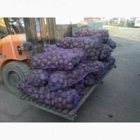 Картофель оптом 5+ от 5.5 руб/кг без посредников