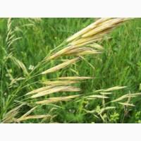 Семена костреца СИБНИИСХОЗ-189 ЭС, РС1, РСт