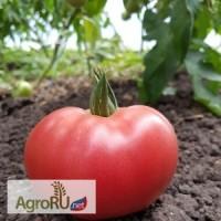 Цетус F1, семена томата, 1000 шт. (Greenteam)
