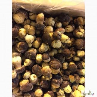 Продам грибы белые замороженные класс экстра