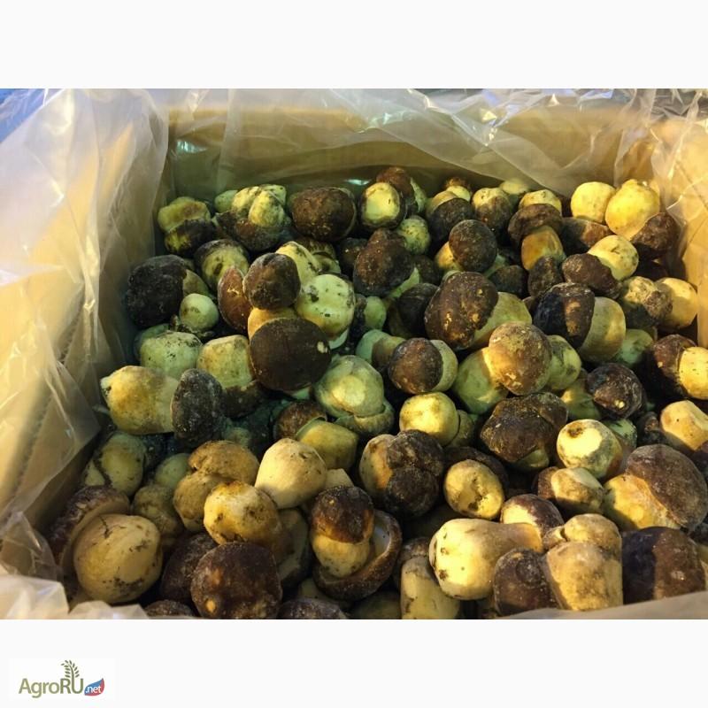 Фото 2. Продам грибы белые замороженные класс экстра