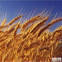 Кормовое зерно с доставкой по области