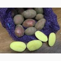 Картофель оптом от производителя. От 15 руб/кг. Скидка