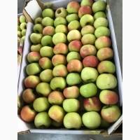 Осуществляем оптовую поставку яблок различных сортов по выгодным ценам