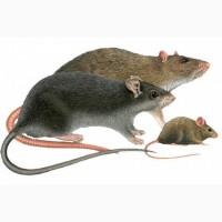 Продажа эффективного средство от мышей и крыс«Бактокумарин»